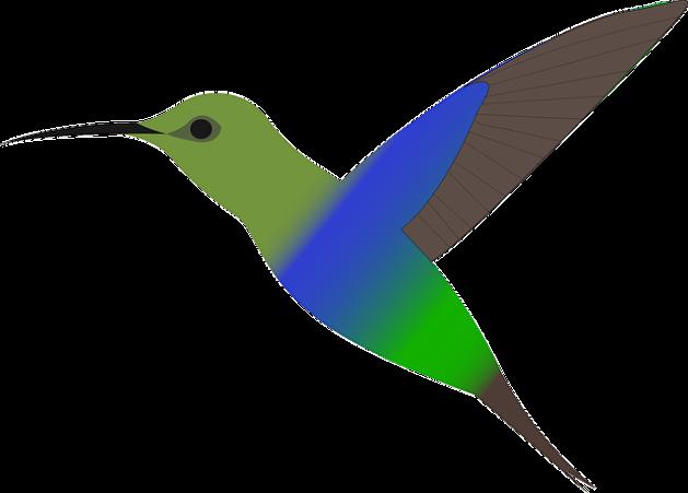 bird-160160_640