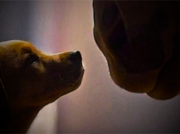Budweiser_Puppy Love_Commercial_2014